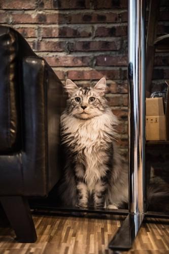 部屋の隅に居る猫