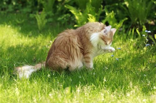 草むらでグルーミングをしている猫