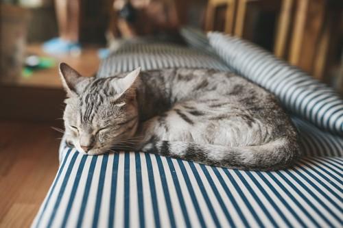 ストライプのソファーで眠る猫
