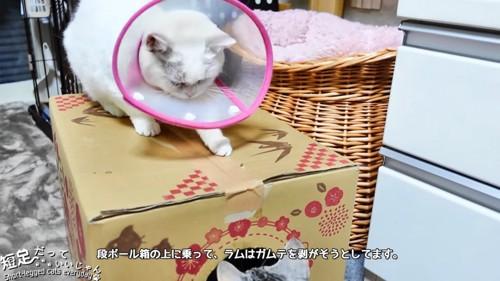 ダンボール箱の上にいる猫