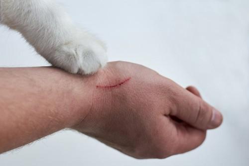 人の手を引っ掻く猫