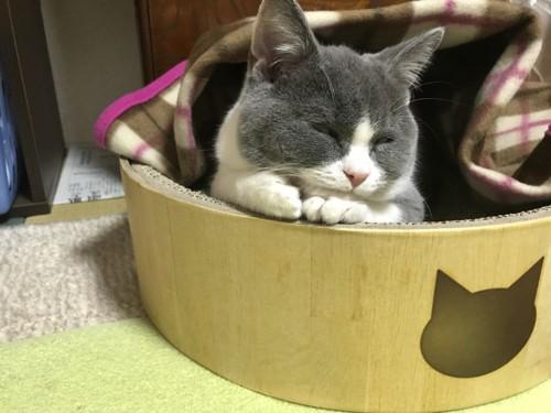 ぬくぬく寝る猫