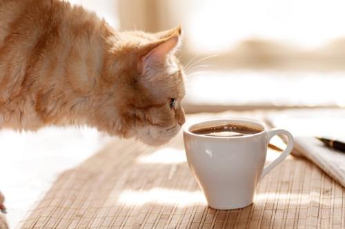 コーヒーの入ったカップの匂いを嗅ぐ猫