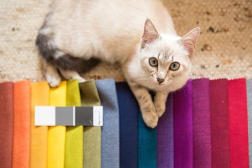 様々な色の布と猫