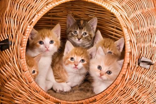 おしゃれなケージに入っている猫