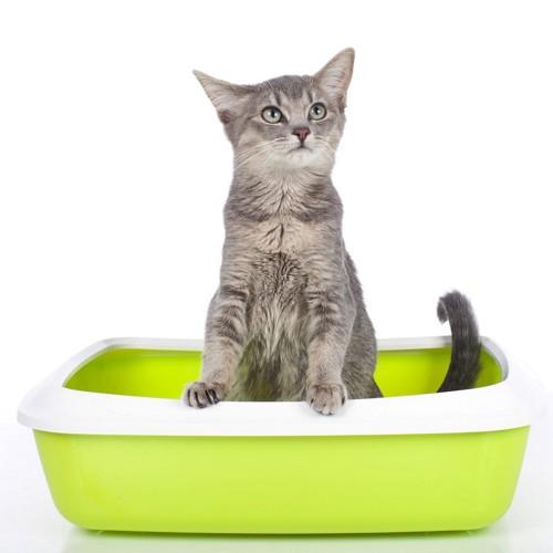 ふちに手をかけてトイレをする猫