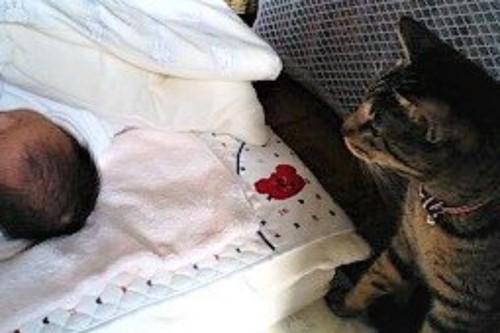 ベビー布団の枕元で赤ちゃんを見守る猫