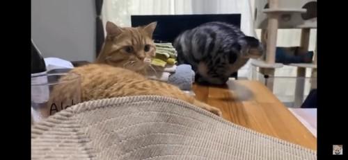 こちらを見つめる猫と猫のお尻