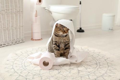 広いトイレでトイレットペーパーをかぶる猫