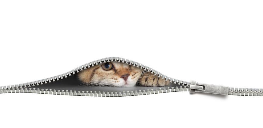 ファスナーの中に潜む猫
