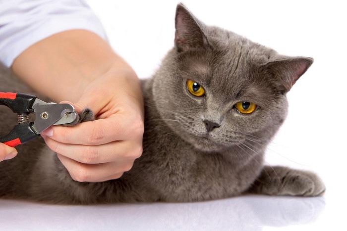 爪切りをされる猫