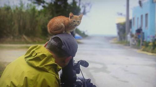 岩合さんの頭の上に乗る猫
