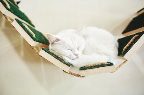 DIYしたキャットウォークの吊り橋で寝ている白猫