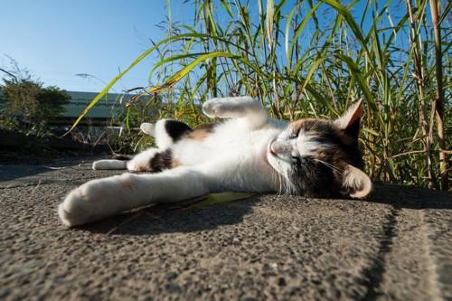 地面の上で寝る猫