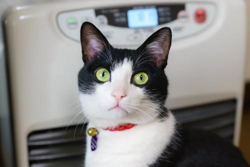 ヒーターの前に座る猫
