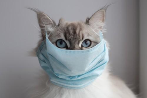 マスクをする猫