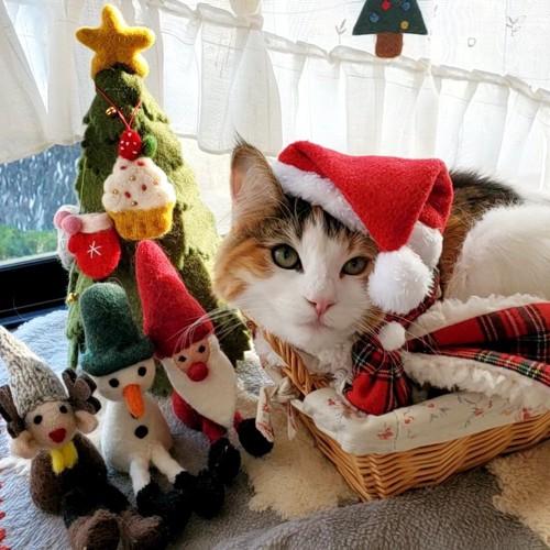 クリスマス準備中の猫