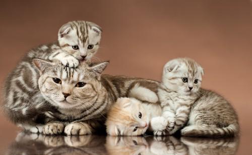 猫の親子の写真
