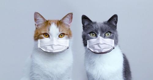 マスクした2匹の猫