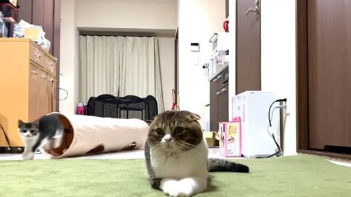 伏せをする猫と後ろを走る猫