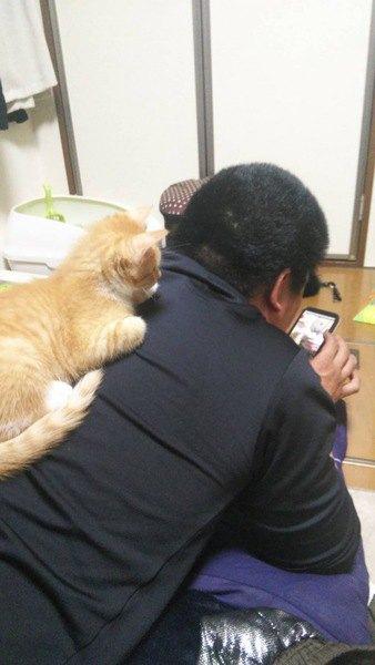 スマホを見る男性の背中に乗る猫