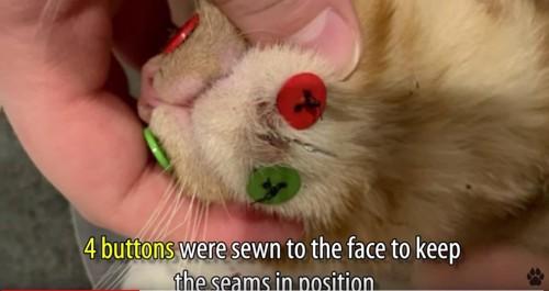顎にボタンを4つつけた猫