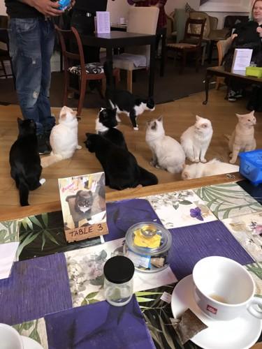 おやつの時間に、猫ちゃん達が勢揃い。