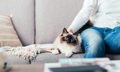 ソファーに座る飼い主の隣で寛ぐ猫