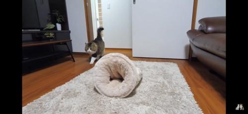 部屋に入る猫