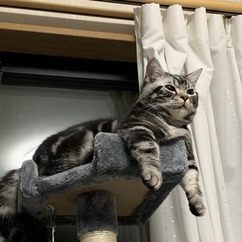 飛ぶことを夢見ている猫