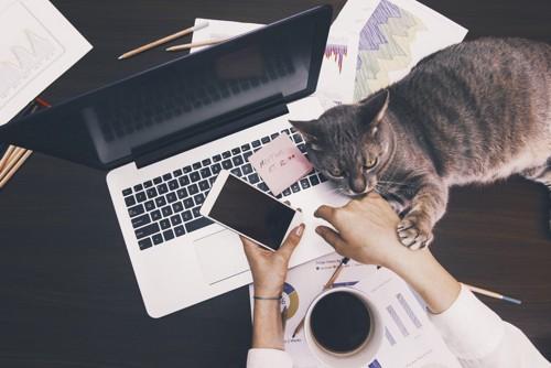 パソコンの横で横たわる猫