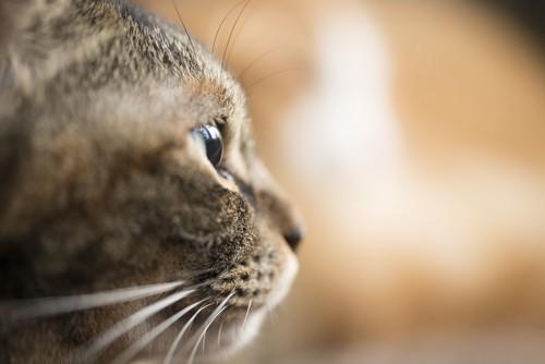 横顔を見せている猫