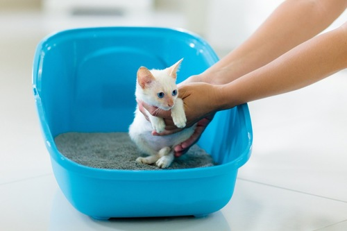 子猫をトイレに入れる人