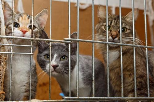 ケージの中の猫達
