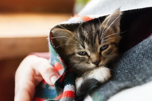 抱っこされた猫