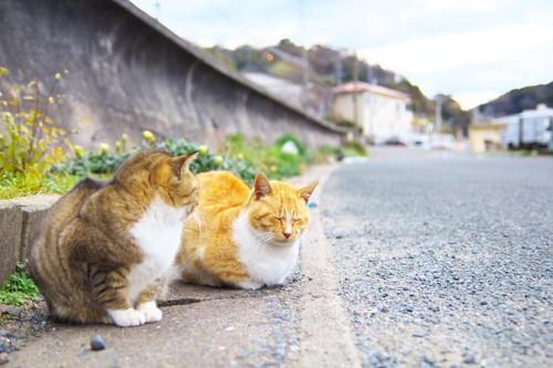 道端にいる2匹の猫
