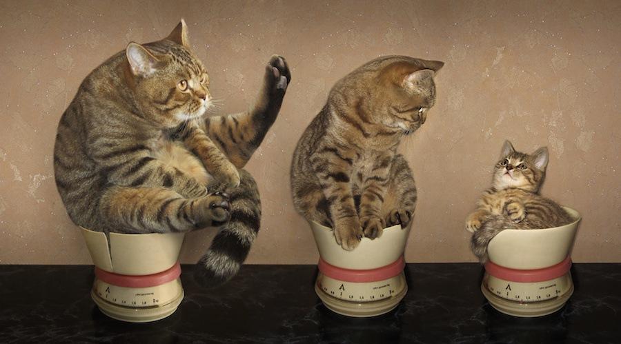 体重計にそれぞれ乗る親子猫