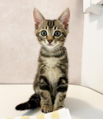 お風呂についてくる猫