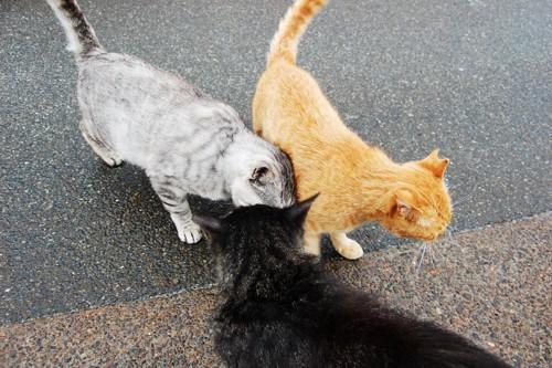 頭つけている猫たち