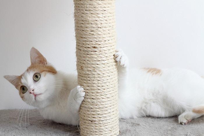 爪とぎにつかまっている猫