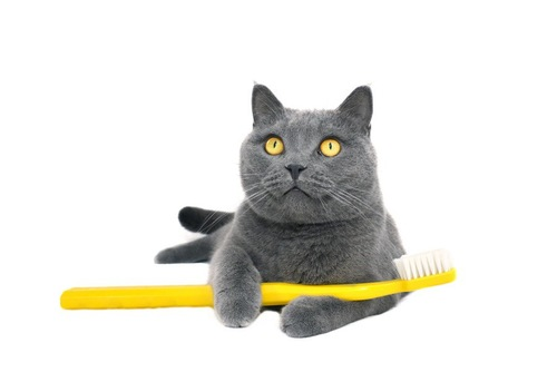 猫歯ブラシ
