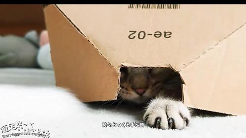 隙間から出てる猫の前足