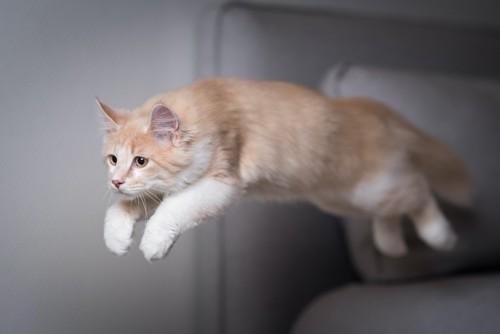 部屋でジャンプしている猫