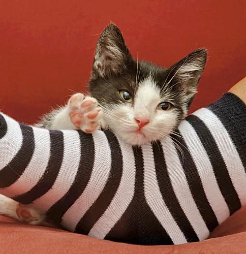 靴下を履いた足で遊ぶ猫