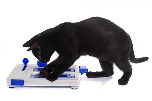 スライド式パズルおもちゃで遊ぶ猫