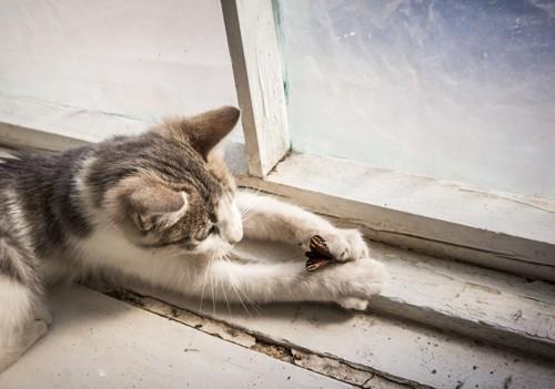 虫を捕まえた猫