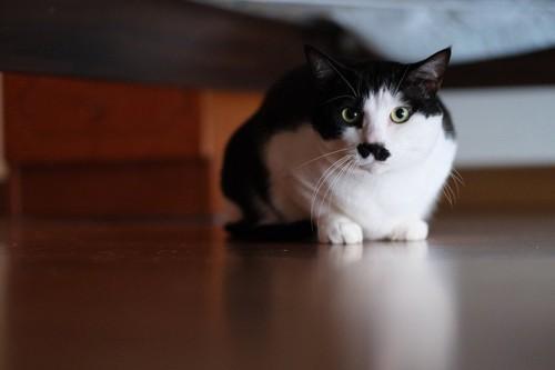 ベッドの奥の方でしゃがむ猫