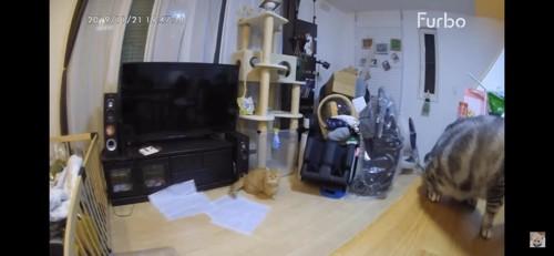 机の上の猫とお座りする猫