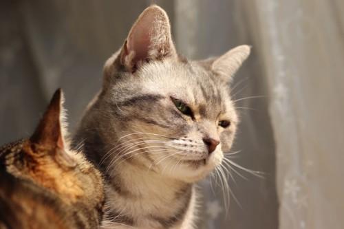 ウットリする猫