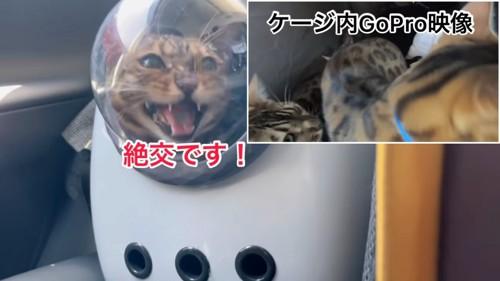 キャリーバッグの中で鳴く猫